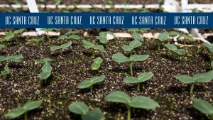 Photo of farm sprouts with blue logo stripe at the top