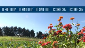 Flowers at the farm with blue logo stripe at the top