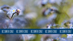 Photo of flowers with blue logo stripe at the bottom