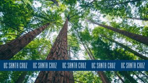 Photo looking up at redwood trees with blue logo stripe at the bottom