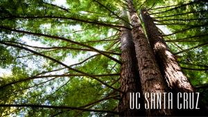 Santa Cruz Redwoods Zoom Background Logo Bottom Right